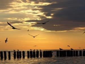 files/user/2512/Burung_Terbang_Melintasi_Senja.jpg
